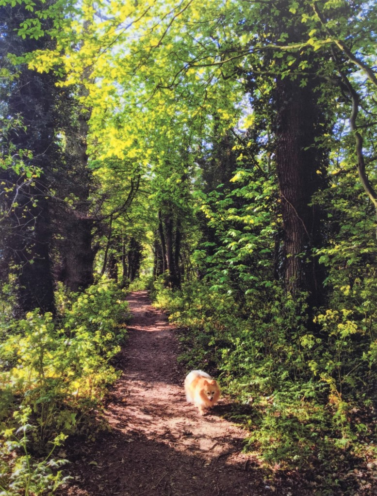 A small dog walking down a country lane, flanked on either side by tall trees.