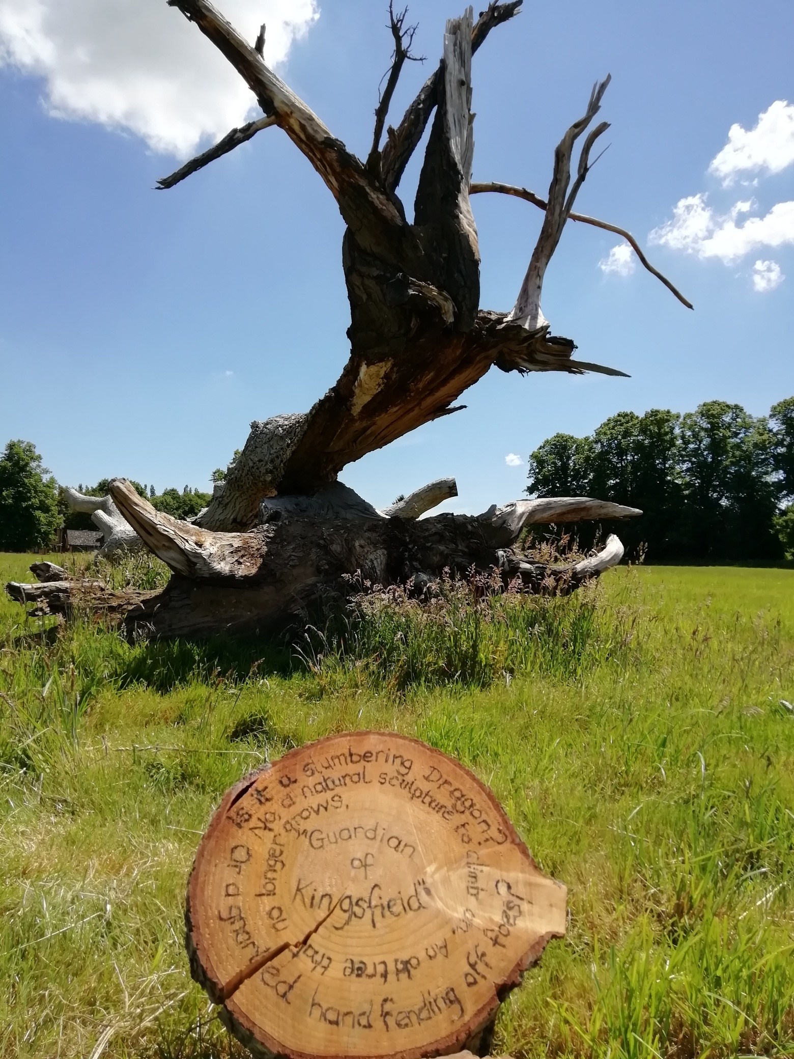 A slice of tree with an inscription reading: Guardian of Kingsfield Is this a slumbering dragon? Or a gnarled hand fending off foes? No, a natural sculpture to climb on An old tree that no longer grows.