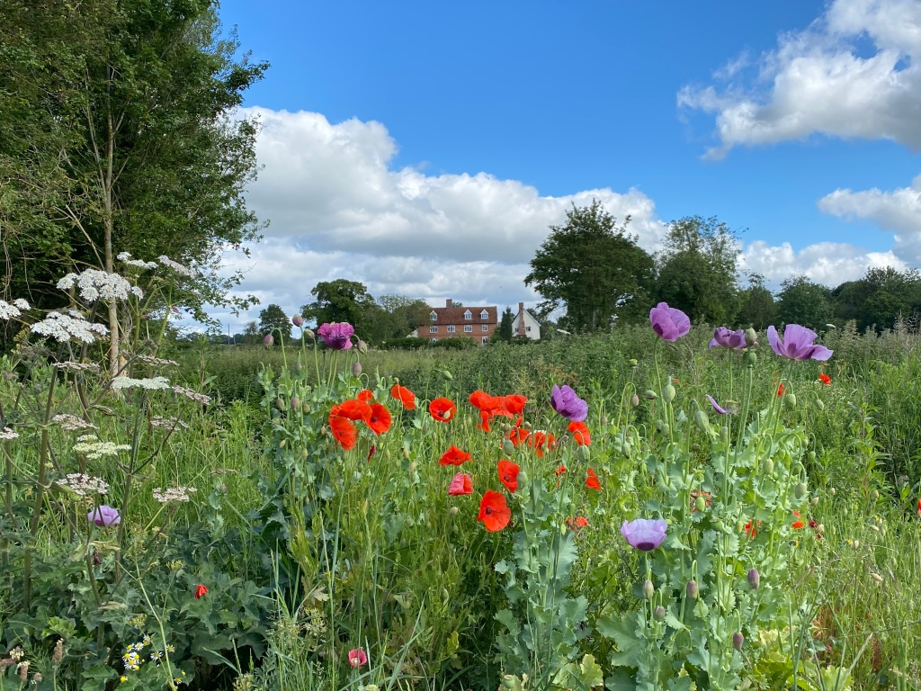 A view past red and purple poppies and white cow parsley in the foreground across a field to a large house in the middle distance. Rafts of white clouds bubble up into the blue sky above the house