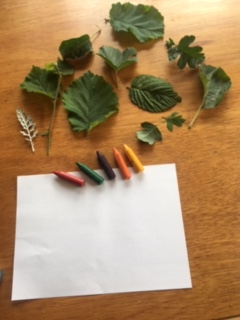 A collection of leaves, coloured crayons and a blank piece of white paper